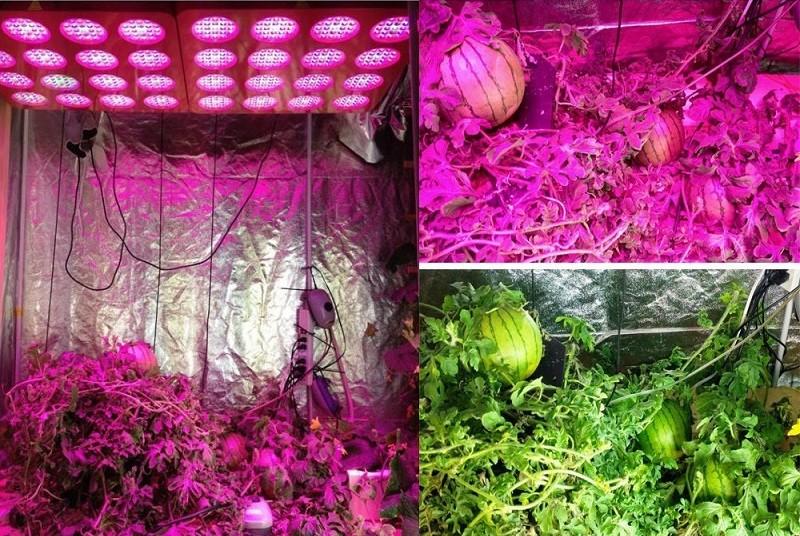3360w led bitki lambası full Spectrum 13